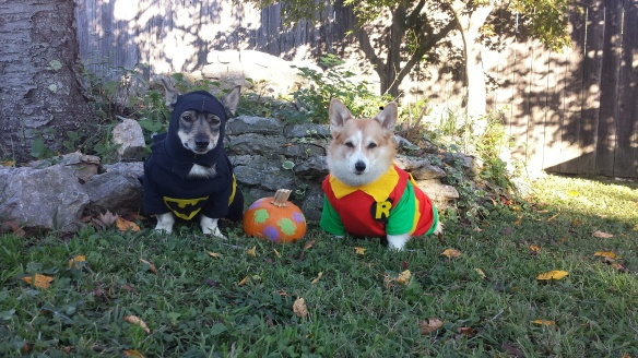 LaMesa & Dally wish everyone a Happy Howl-O-Ween as the Dynamic Duo: Protecting the world's chewies as Batman & Robin!